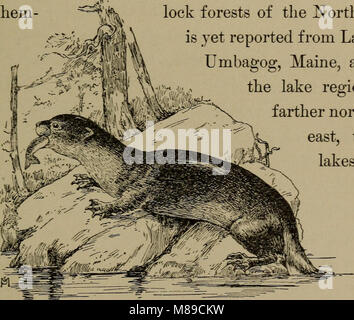 Familiar life in field and forest; the animals, birds, frogs, and salamanders (1898) (14568749418) Stock Photo