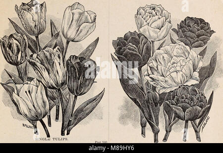 Florists' wholesale price list of bulbs and plants - for fall, 1900 (1900) (20373833359) - Stock Photo