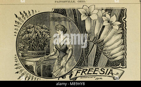 Florists' wholesale price list of bulbs and plants - for fall 1899 (1899) (20529150186) - Stock Photo