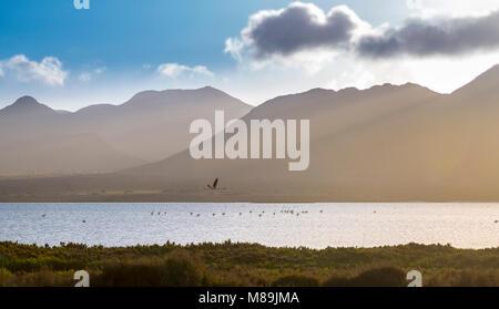 Flamingo flying through paradise, in the natural park of Cabo de Gata, Almeria ... - Stock Photo