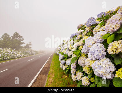 Misty Road on Flores Island, Azores, Portugal - Stock Photo