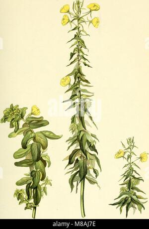 Die mutationstheorie. Versuche und beobachtungen über die entstehung von arten im pflanzenreich (1903) (20311835994) - Stock Photo
