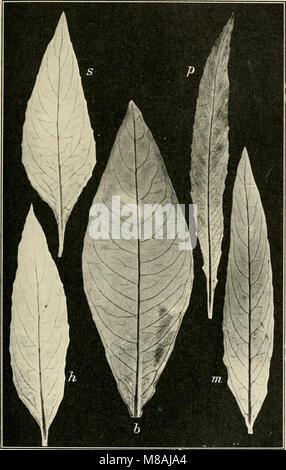 Die mutationstheorie. Versuche und beobachtungen über die entstehung von arten im pflanzenreich (1903) (20933889215) - Stock Photo