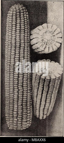 Hastings' seeds - spring 1912 catalogue (1912) (14596004598) - Stock Photo