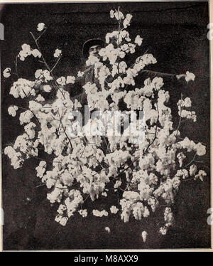 Hastings' seeds - spring 1912 catalogue (1912) (14759643466) - Stock Photo