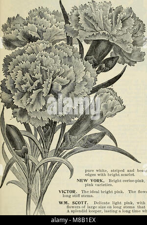 High grade 1899 bulbs and seeds for fall planting (1899) (19934895473) - Stock Photo