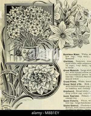 High grade 1899 bulbs and seeds for fall planting (1899) (20367680650) - Stock Photo