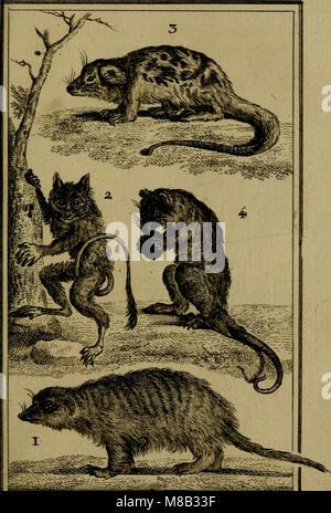 Histoire naturelle, générale et particulière, avec la description du Cabinet du roi (1750) (14578689718) - Stock Photo