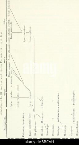Die Säugetiere. Einführung in die Anatomie und Systematik der recenten und fossilen Mammalia (1904) (20325451744) - Stock Photo