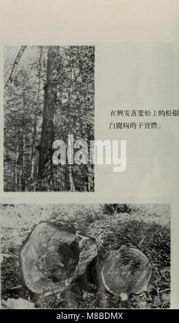 Da xing an ling sen lin zi yuan diao cha bao gao (1954) (20841316065) - Stock Photo
