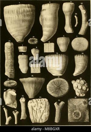 Denkschriften der Kaiserlichen Akademie der Wissenschaften - Mathematisch-Naturwissenschaftliche Classe (1854) (20664262669) - Stock Photo