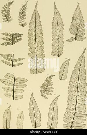 Denkschriften der Kaiserlichen Akademie der Wissenschaften - Mathematisch-Naturwissenschaftliche Classe (1864) (20664848458) - Stock Photo