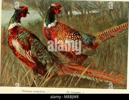 Der Fasan in Bayern - eine Historische und Zoologische darstellung (1906) (20674870569) - Stock Photo