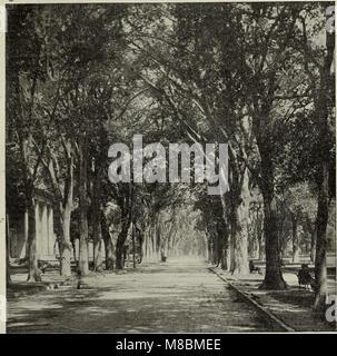 Descriptive catalogue - ornamental trees, shrubs, vines, evergreens, hardy perennials and fruits (1902) (20565585895) - Stock Photo