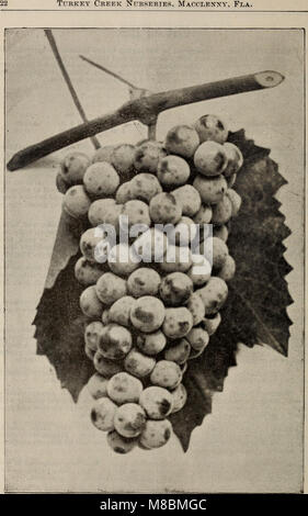 Descriptive catalogue of all kinds of fruit and ornamental trees (1901) (20562386005) - Stock Photo