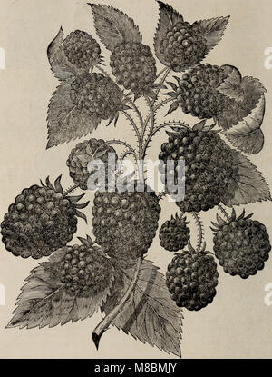 Descriptive catalogue of fruit and ornamental trees, shrubs, vines and plants (1898) (20577738761) - Stock Photo