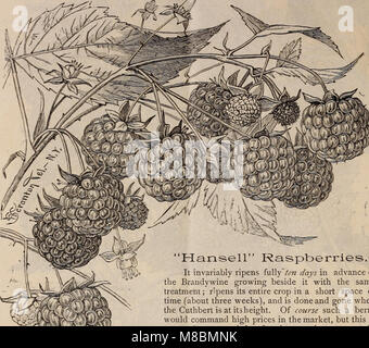 Descriptive catalogue of grape vines and small fruits (1886) (20252426564) - Stock Photo