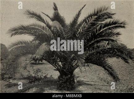 Descriptive catalogue of small fruits, fruit trees, grape vines - ornamental trees, shrubs, and roses (1897) (19925724823) - Stock Photo