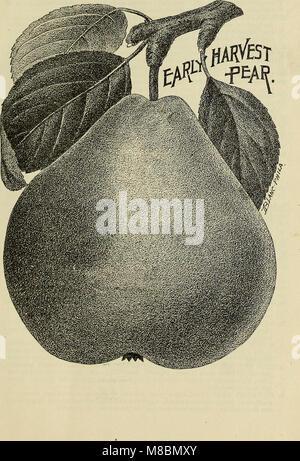 Descriptive catalogue of the fruit and ornamental trees, grape vines, small fruits, shrubs, plants, &c. (1897) (20363404789) - Stock Photo
