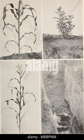 Development and activities of roots of crop plants; a study in crop ecology (1922) (20880991682) - Stock Photo