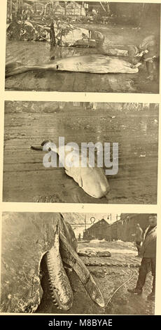 Discovery reports (1938) (20340968414) - Stock Photo