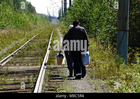 man in the forest, gathering for a mushrooms picking - Stock Photo