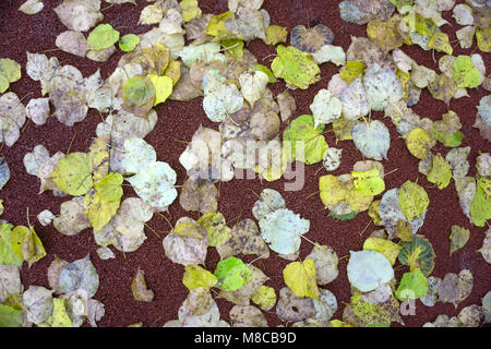 Leaves on the floor. Autumn colorful background. - Stock Photo