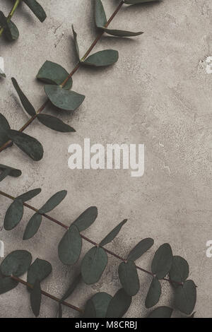 top view of green eucalyptus leaves on concrete surface  - Stock Photo
