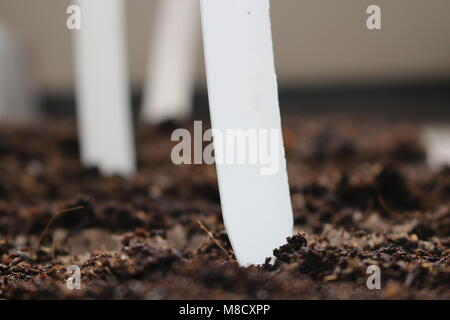 seedlings in peat pots.black hole trays for agricultural seedlings.The spring planting. Early seedling , grown from - Stock Photo