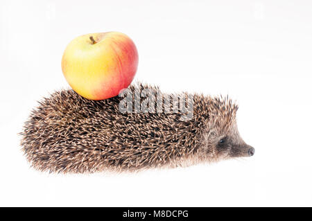 Hedgehog with apple on it's back - Stock Photo