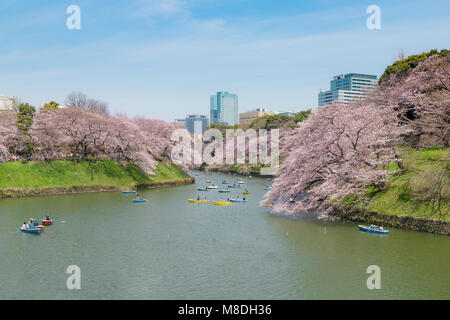 View of massive cherry blossom in Tokyo, Japan as background. Photoed at Chidorigafuchi, Tokyo, Japan. - Stock Photo