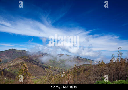 Gran Canaria, March 2018, view over burned pine trees towards small valley filled with clouds - Stock Photo