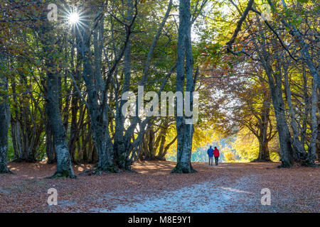 Autumn in Canfaito wood, San Severino Marche village, Macerata district, Marches, Italy - Stock Photo