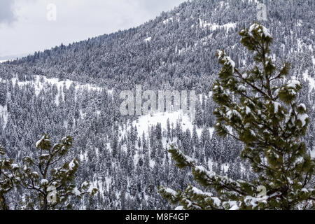 Mountain side of mixed coniferous forest in Canada's Okanagan, is covered with fresh, white snoe - Stock Photo