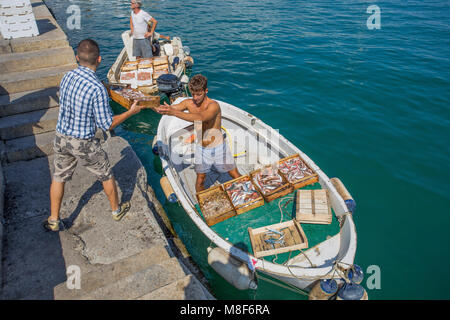 SANTA MARGHERITA LIGURE, ITALY, JULY, 12, 2017 - Fishermen unload the fish after a day of work, Genoa province, - Stock Photo