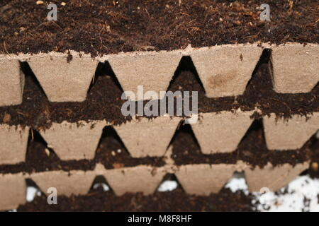 seedlings in peat pots.Baby plants seeding, black hole trays for agricultural seedlings.The spring planting. Early - Stock Photo