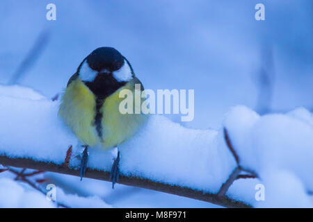 Little bird in snow - Stock Photo
