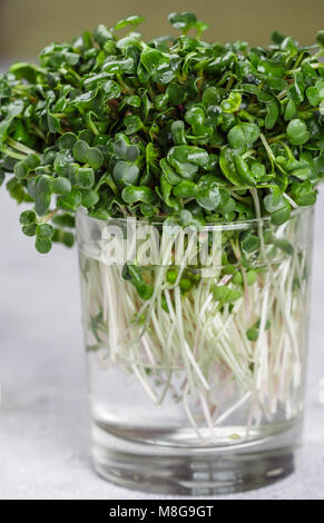 Raw Green Organic radish or daikon Microgreens for making fresh salads. detox, diet. seedlings. Concept and healthy - Stock Photo