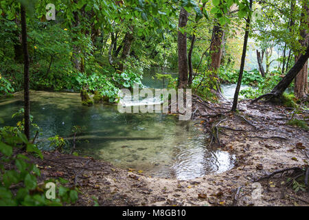 A small river inside a forest in Autumn time - Stock Photo