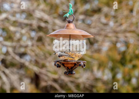 Titmouse on a feeder with sunflower seed in his mouth. - Stock Photo