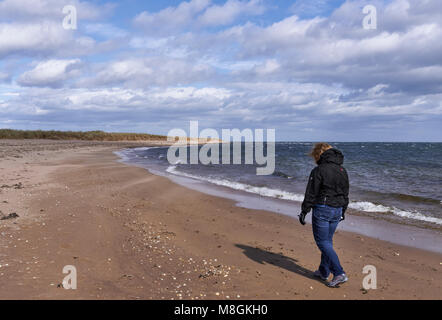 A Woman walking along Easthaven Beach in Angus, on a very windy and fresh day in April.