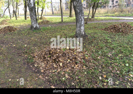 autumn city park. fallen yellow maple leaves collected in a neat pile under a tree on a lawn - Stock Photo
