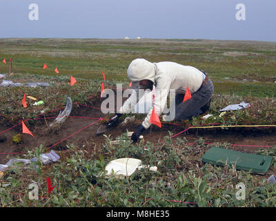 Marie -Danish National Museum excavating near Cape Espenberg. Marie and others are studying the past climate and - Stock Photo