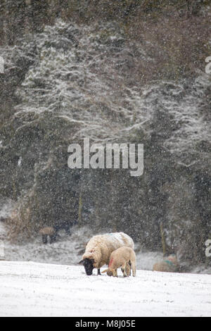 Flintshire, Wales,UK Weather: With Met Office Warnings in place for snow the Mini Beast from the East brings a chill - Stock Photo