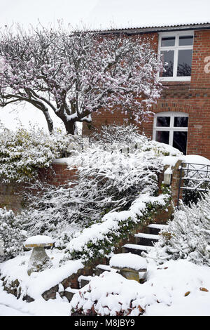 Blossom covered in Snow in the village of Edington in Wiltshire UK - Stock Photo