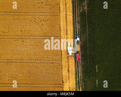 Aerial view of combine harvester unloading harvested wheat into agricultural tractors trailer wagon - Stock Photo