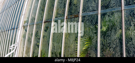 Condensation collects on the inside windows of the famous Palm House in Kew's Royal Botanical Gardens - Stock Photo