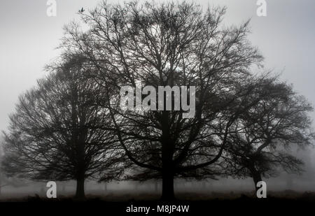 Misty early morning with three leafless mature oak trees silhouetted against an October sky in Richmond Park in - Stock Photo