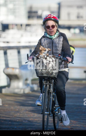 Woman riding her bike while her small dog sits in the basket. - Stock Photo
