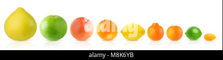 Isolated citrus fruits in a row. Pomelo, white and pink grapefruits, orange, lemon, clementine, tangerine, lime - Stock Photo